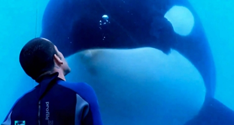 blackfish screen